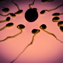 Antioxidants and Sperm